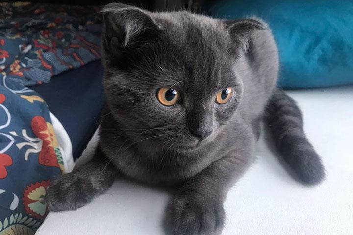 clever kitten