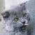 Mochi Kitten Gossip Girl Skinny Lattes