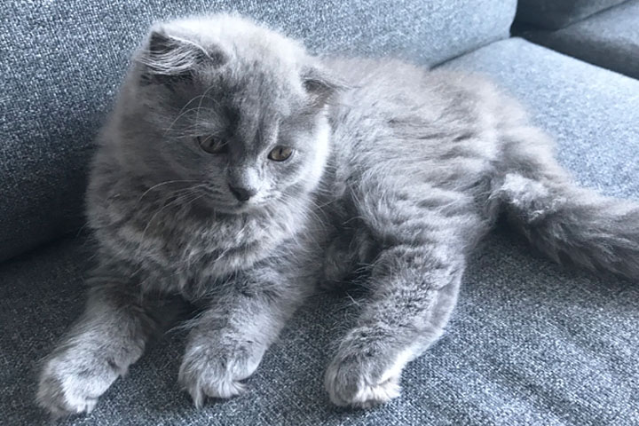 mochi kitten