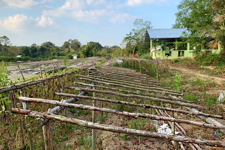 Belitung farm