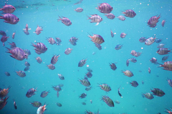 snorkelling Belitung